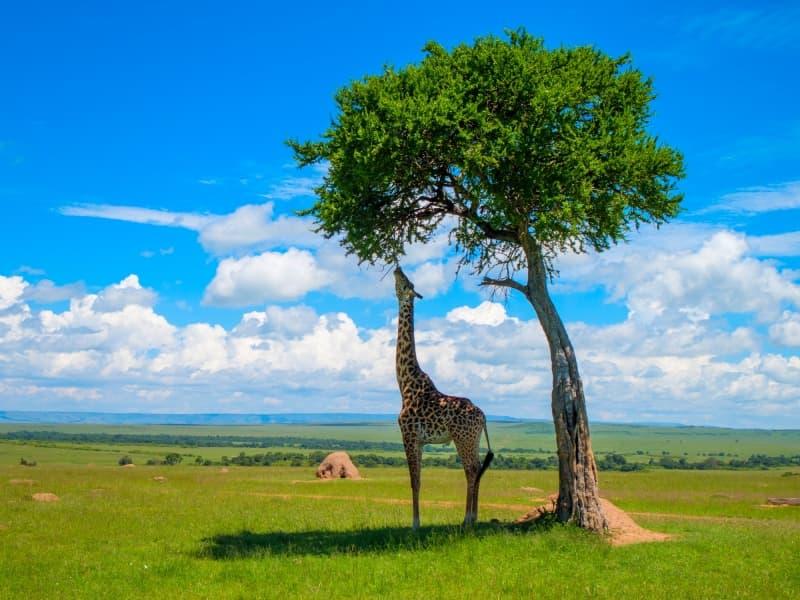 Les destinations à privilégier pour parfaire un voyage en Afrique du Sud