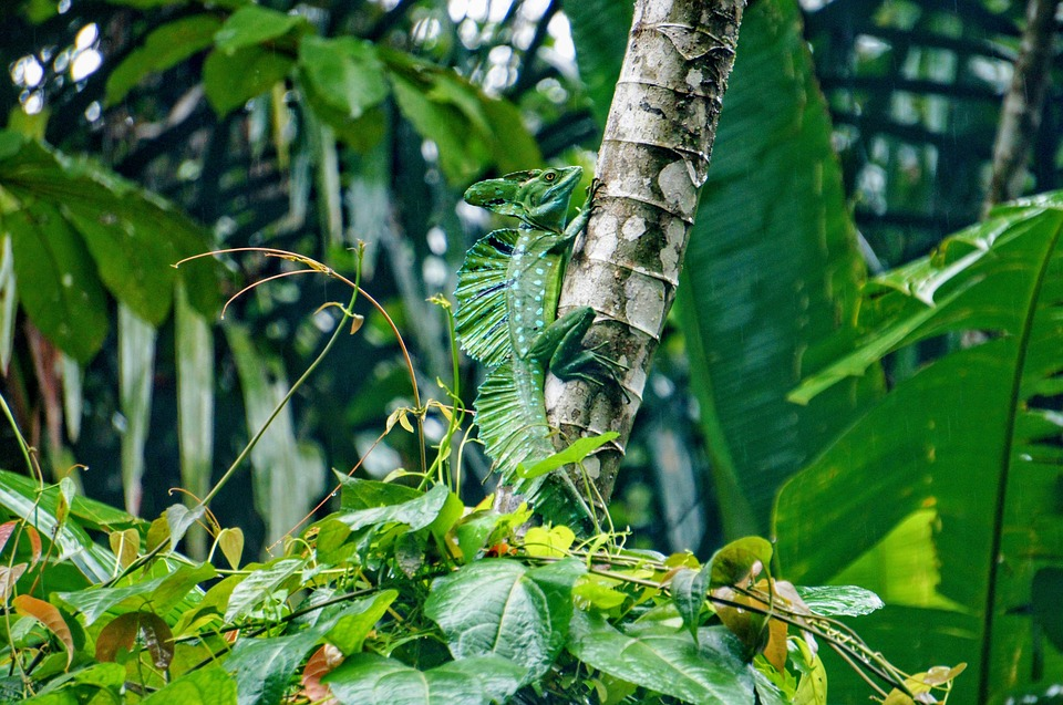 Le Costa Rica, un pays d'Amérique centrale qui vaut un détour