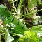 Les espaces naturels à privilégier durant un séjour au Costa Rica